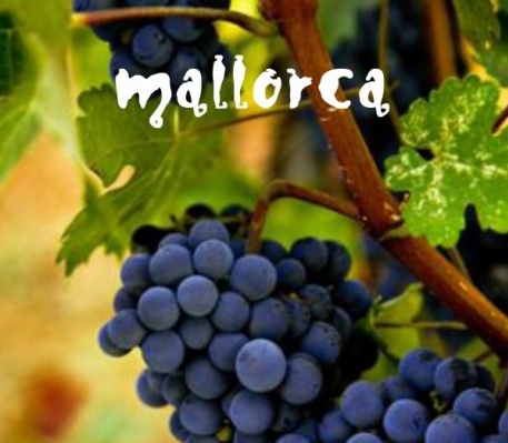 Wijntours op Mallorca