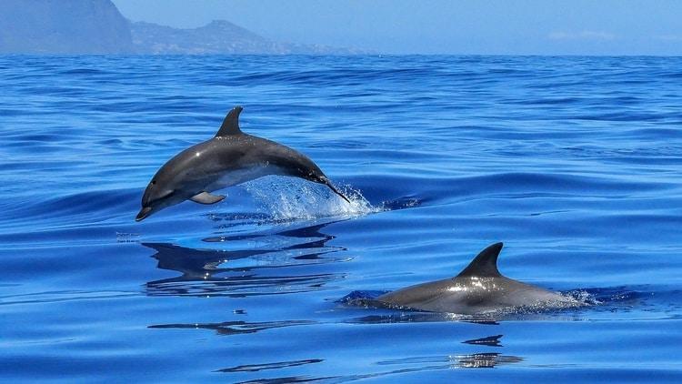 Dolfijnen spotten Mallorca